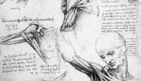 Leonardo_da_Vinci_-_Anatomical_studies_of_the_shoulder_-_WGA12824.jpg_Crop